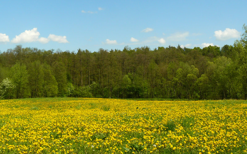 Łąki w dolinie Chojnatki we wsi Paplin